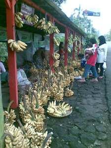pisang, oleh-oleh alternatif dari kaliurang selain ampyang kacang. foto kunto